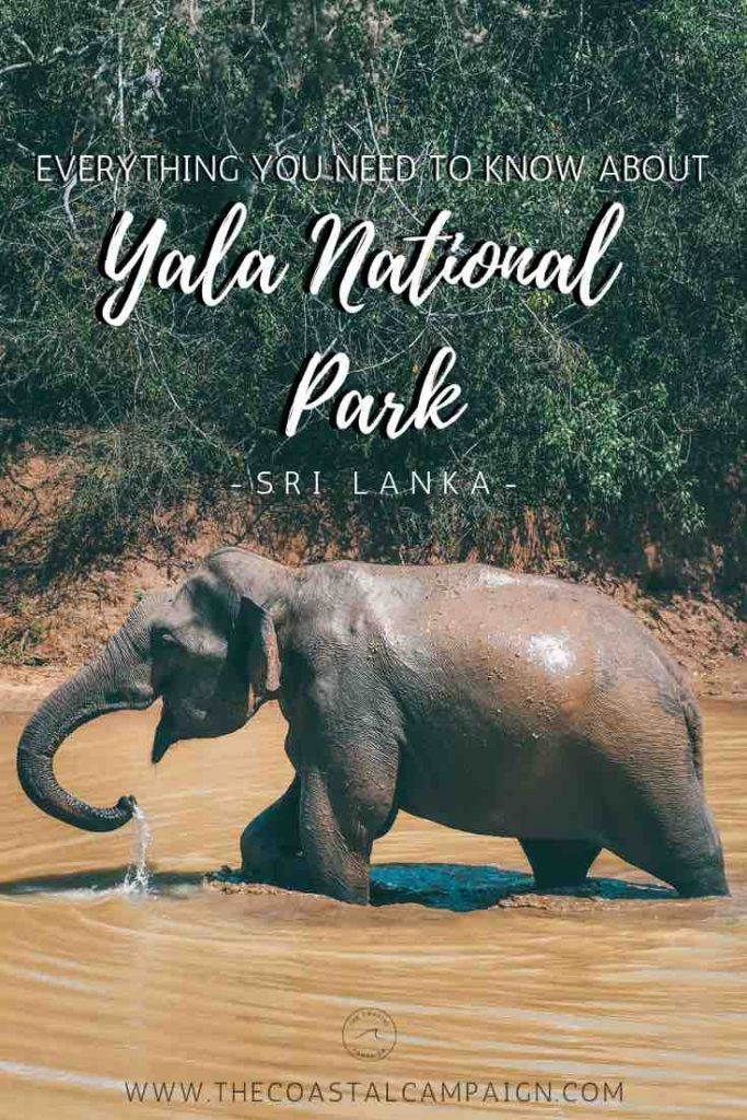 Everything You Should Know About Yala National Park