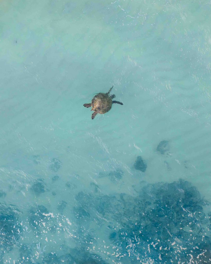 Aerial view of a turtle at Dalawella Beach