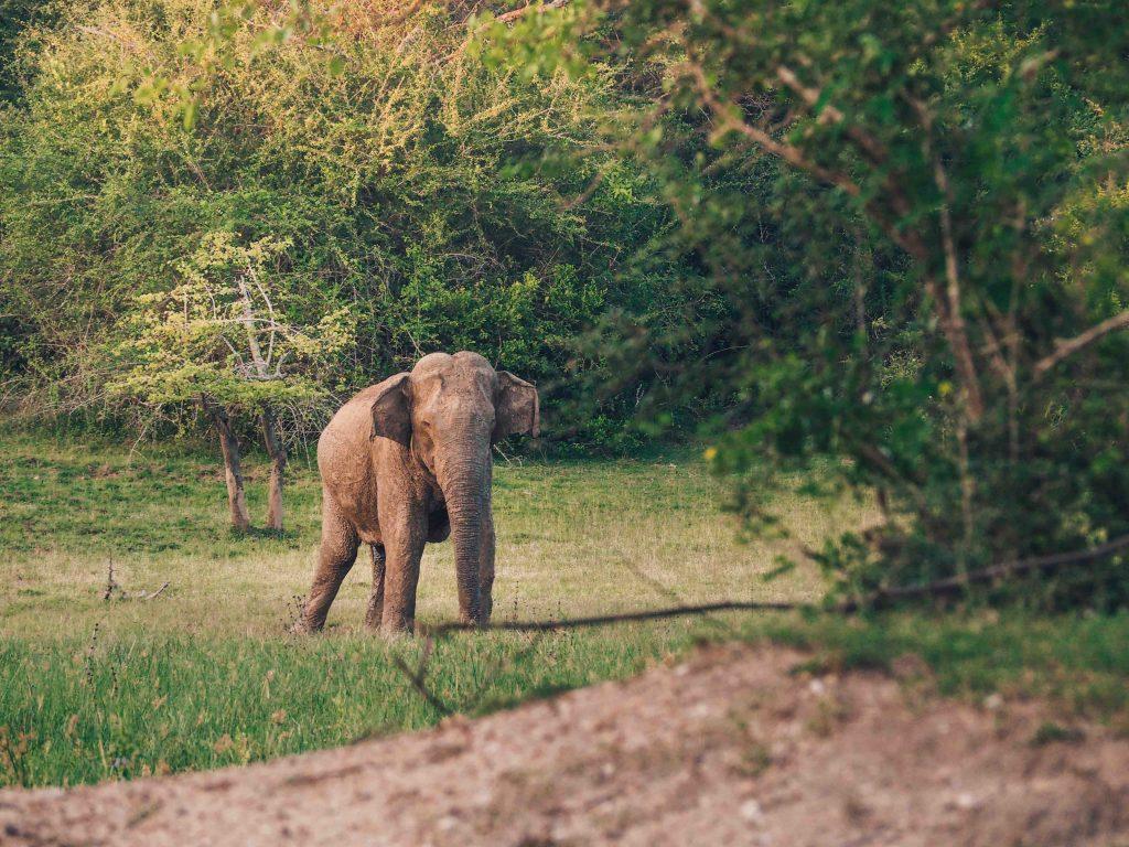 Elephant on safari in Kumana National Park