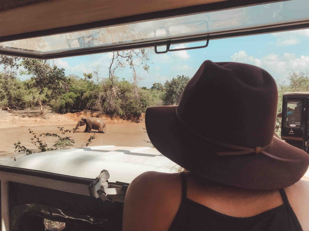 Spotting elephants from our jeep
