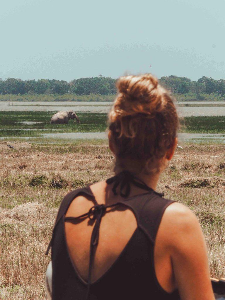Wild elephants on safari